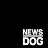 뉴스독 logo